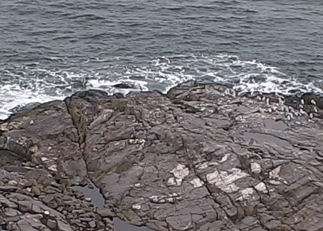 North East Corner Gulls